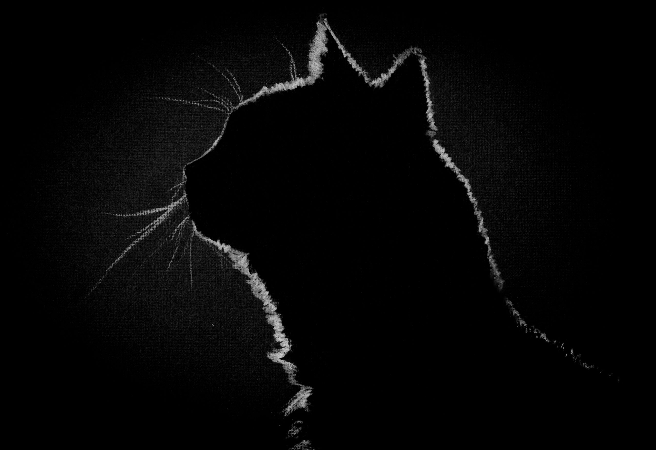 The Master and Margarita has inspired this feature image, displaying the profile of a cat in the dark