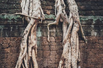 In the Mood for Love shapes solitude and expectation. It does so through locations as well. This image shows two tree trunks inside the ancient temple of Angkor Wat in Cambodia. Angkor Wat is an important location in the movie.