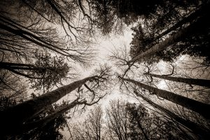 Nothing - The meaning of life - trees from below