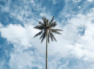One Hundred Years of Solitude - A palm