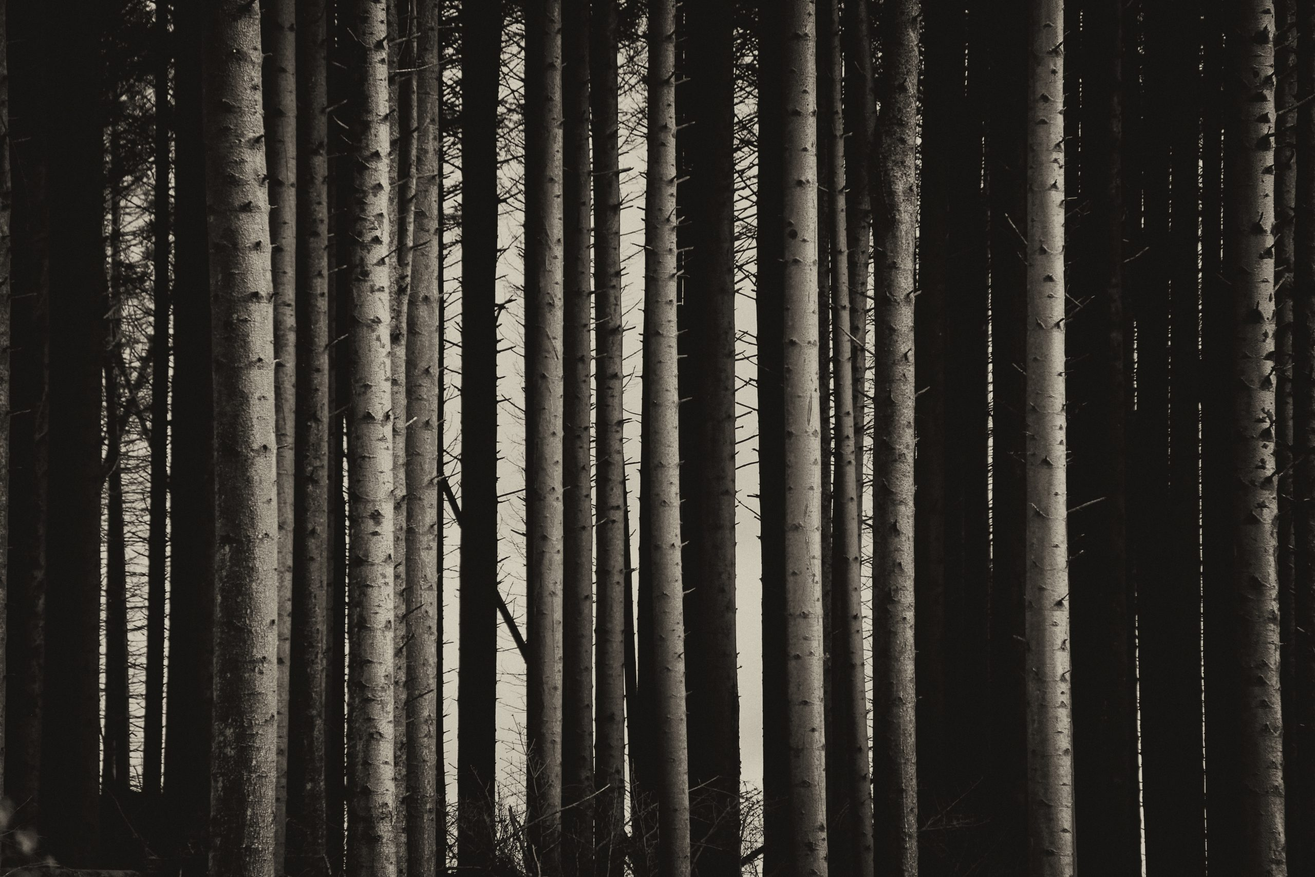 Norwegian Wood | The charm in simplicity